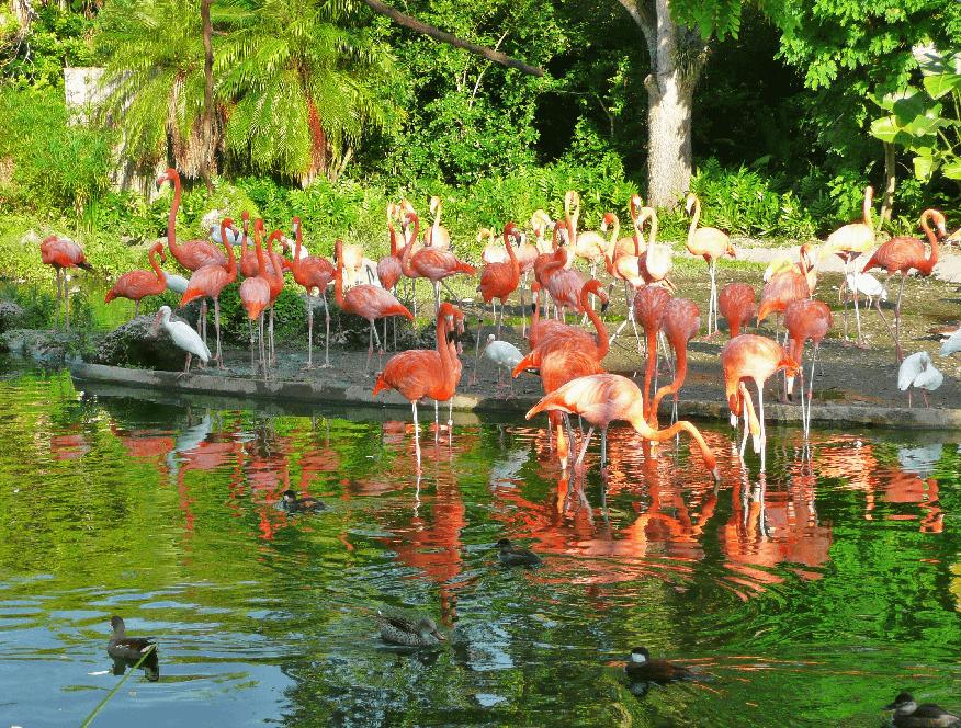 Dicas para uma visita ao Zoo Miami