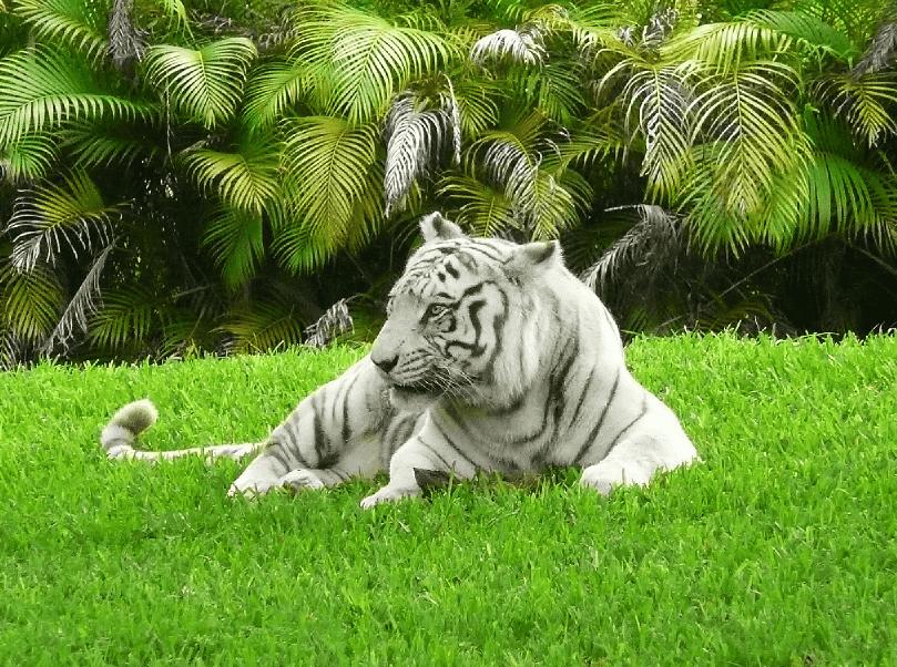 Informações do Zoo Miami