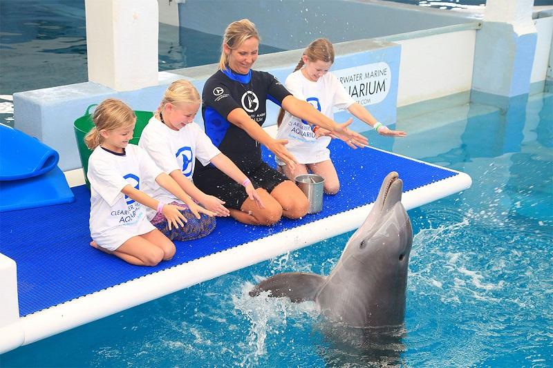 O que fazer em Clearwater: Marine Aquarium